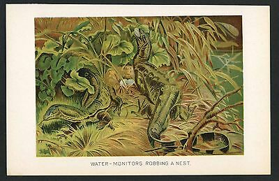 WATER MONITOR, Vintage 1890's Chromolithograph Print, Antique, 083