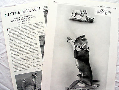 BASENJI DOG BREED KENNEL CLIPPINGS 1940s - 1960s x 30