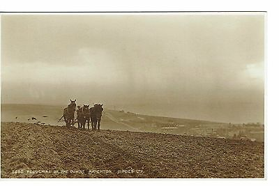 Brighton Ploughing The Downs Rp 1920's Publisher Judges