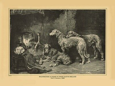 "Wolfhound print ""Wolfhounds in Native Ireland"