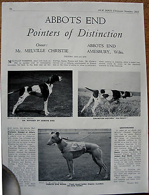 POINTER DOG BREED KENNEL CLIPPINGS INCL JUDGES CHOICE ARTICLE 1930s - 70s X 30