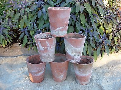 "6 Hand Thrown Sankey Bulwell  Long Tom Terracotta Plant Pots  4.75""  High (1116)"
