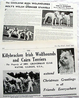 IRISH WOLFHOUND DOG KENNEL CLIPPINGS 40s-00s  x 30s