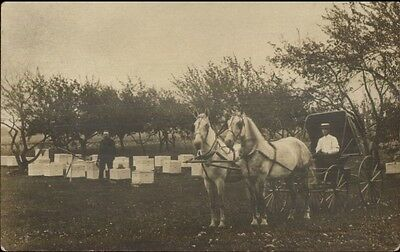 Fruit Delivery Wagon in Field w/ Boxes - Apple Trees? c1910 Photo Postcard