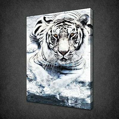 Beautiful Silver Tiger Wild Cat Canvas Wall Art Print Picture Ready To Hang