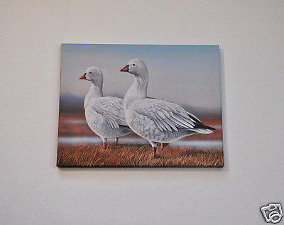Ross's Goose Ducks Gallery Wrapped Canvas 11x14 Reproduction Bird Print