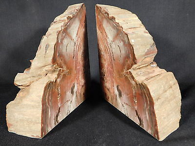 A BIG Beautiful Pair of Triassic Arizona Petrified Wood Fossil Bookends 4680gr e