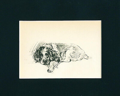 Dog Print 1937 Cocker Spaniel relaxing by Lucy Dawson VINTAGE