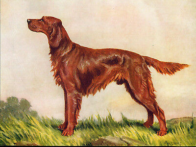 VINTAGE Dog Print 1934 Irish Setter by F T Daws