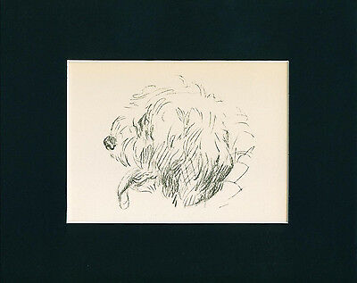 Dog Print 1940 Old English Sheepdog Head Study by Lucy Dawson VINTAGE