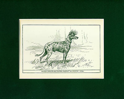 Dog Art Print 1900 Chinese Crested Dog ANTIQUE