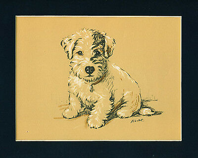 Dog Print 1937 Sealyham Terrier by Lucy Dawson VINTAGE
