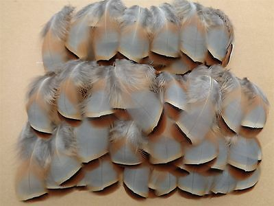 "100 French Partridge Flank Feathers 1.5"" - 3"" - Fly Tying, Crafting"