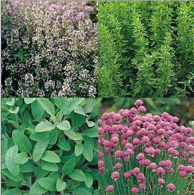 Suffolk Herbs - Picture Packet - Herb Garden Collection Seed