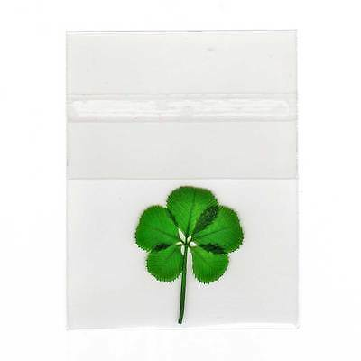 Pressed and Preserved 5 Leaf Clover in Cello Sleeve Item CL-5L