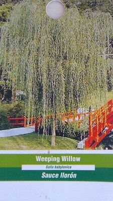 4'-5' live WEEPING WILLOW Tree Fast Growing Trees Healthy Hardy Plant Easy Grow