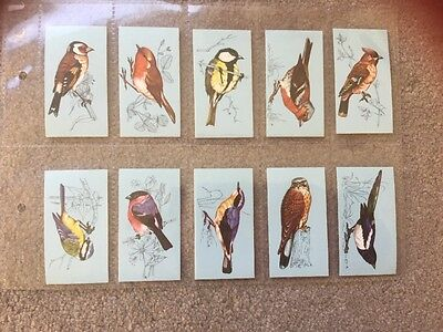 Exc Full Set Tetley British Birds 1970 Superb  Rare Set Of Trade Cards