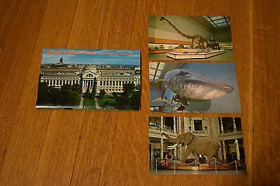 Lot of Smithsonian Museum of Natural Historty Mid-Century Vintage Postcards