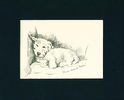Dog Print 1937 sleeping Sealyham Terrier by Lucy Dawson VINTAGE