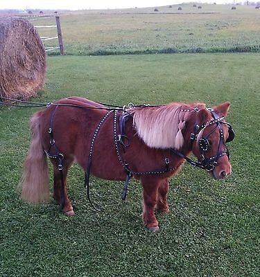 Black Leather Studded Mini Miniature Driving Horse Harness Complete FREE SHIP