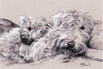 "SOFT COATED WHEATEN TERRIER SCWT DOG ART LIMITED EDITION PRINT - ""Soft Hearted"""