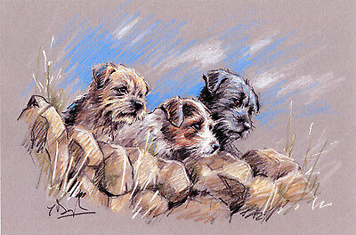 Border Terrier Patterdale Parson Jack Russell Dog Art Limited Edition Print