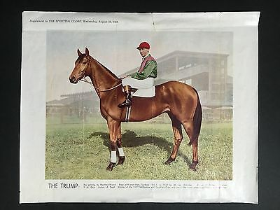 """the Trump"" 1938 Sporting Globe Supplement Photo"
