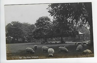 Sheep in the Park, Wisbech - RP No.783