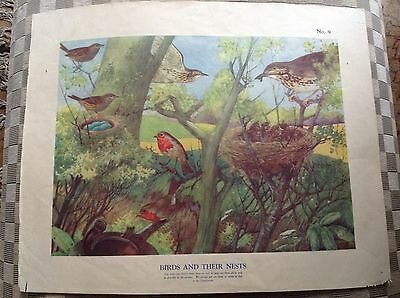 Vintage Macmillan Classroom Poster Birds And Their Nests 1950's