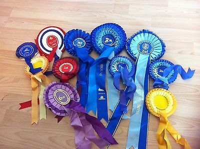 Job Lot Of Used Equestrian Rosettes