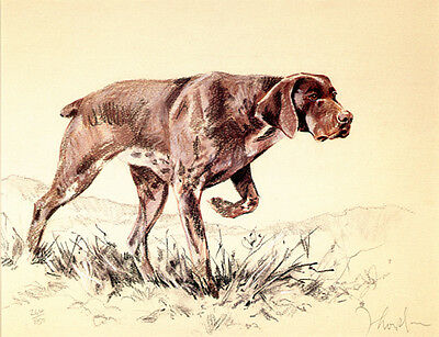 German Short-Haired Pointer Gsp Dog Fine Art Limited Edition Print