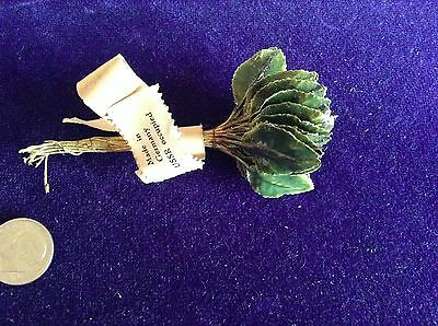 """Vintage Millinery Flower Leaf Green 3/4"""" Doll Size Lot 36pc Glossy for Hat Y77"""