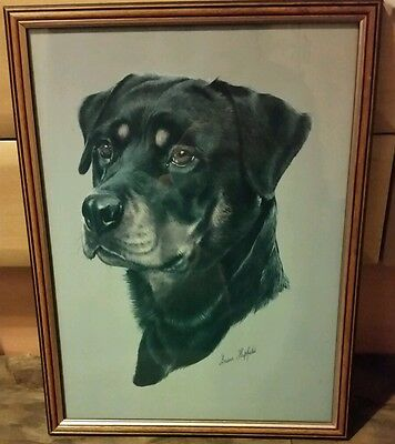 Beautiful print of rottweiler by Brian hupfield