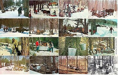 Maple Syrup Sugar Bush Lot of 25 Vintage Postcards 1950s-1970s