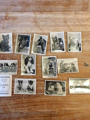 Cavanders Ltd Cigarette Cards - Cats Dogs Horses X 13