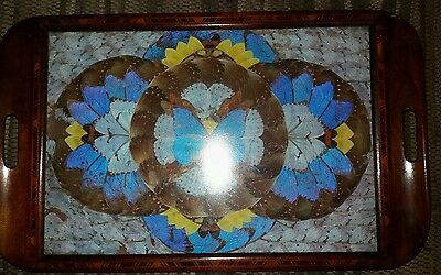 ANTIQUE MAHOGANY TRAY WITH PARQUETRY INLAY - DECORATED WITH Butterfly wings!!
