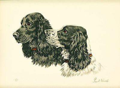 Dog Print Cocker Spaniel Dogs by Paul Wood Black Cocker VINTAGE