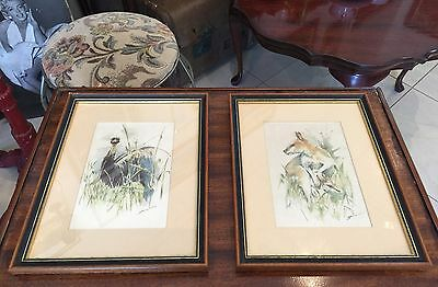 VINTAGE FRAMED ILLUSTRATIONS AUSTRALIAN WILDLIFE EMU KANGAROO By ZENON WEINSTOCK