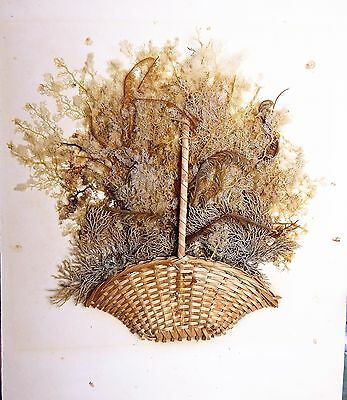 Very Rare Seaweed Sea Moss Herbs Victorian Moss Work Mosswork Antique 19c