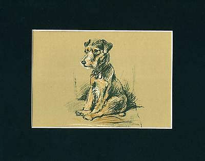 VINTAGE Dog Print 1936 Lakeland Terrier by Lucy Dawson Cute