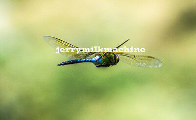 Digital Photo/Picture/Desktop Wallpaper/Dragonfly #1***FREE SHIPPING***