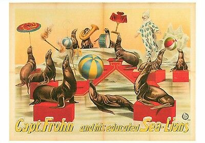 Captain Frohn and Educated Sea Lions Performing Seals Circus Modern Postcard