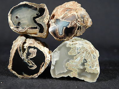Lot of FOUR Small Polished AAA BLUE FOREST Petrified Wood Fossils Wyoming 101gr