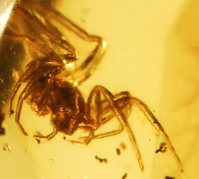Nice Spider in authentic Dominican Amber Gemstone - fossil bug