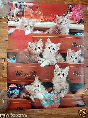 "1996 Cat Cupboard by Scandecor 16 ½"" x 22 ¾"" Poster"