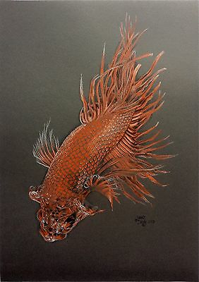 Siamese Fighter Fish Drawing Portrait Art Signed Original Coloured Pencil A3