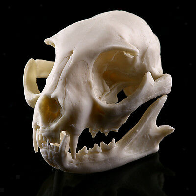 Resin Cat Skull Bone Statue Model for Aquarium Fish Tank Mini Ornament