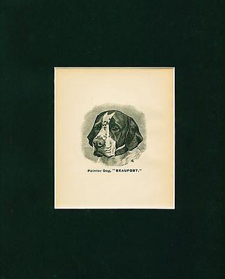 ANTIQUE Dog Print 1886 Pointer Dog named BEAUFORT