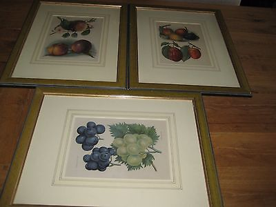 Three Antiquarian Prints of 'Wrights Fruit Growers Guide Chromo-Lithograph 1880