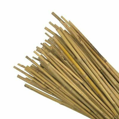 6Ft Heavy Duty Bamboo Strong Garden Canes Support Plant Fencing Thick12-14Mm Dia